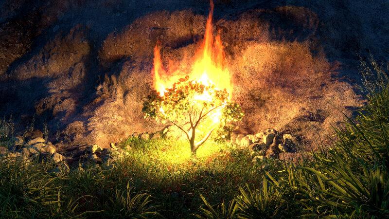 Our Burning Bushes